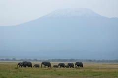 Mt. Kilimanjaro und Elefanten Stockbild