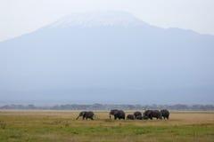 Mt. Kilimanjaro und Herde der afrikanischen Elefanten Lizenzfreie Stockfotos