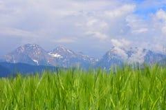 Mt Kocna、Grintovec和Kalski在卡姆尼克萨维尼亚河阿尔卑斯greben 图库摄影