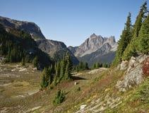 Mt. Larabee in de Staat van Washington Stock Afbeelding