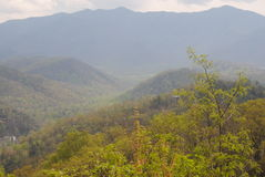 Mt. Leconte 免版税库存图片
