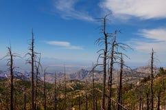 MT Lemmongebied, dichtbij Tucson, Arizona Coronado nationaal bos royalty-vrije stock afbeeldingen