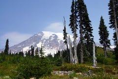 Mt Más lluvioso, con el bosque de la conífera Fotografía de archivo libre de regalías