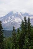 Mt Más lluvioso, con el bosque de la conífera Imagen de archivo