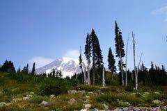 Mt Más lluvioso, con el bosque de la conífera Fotografía de archivo