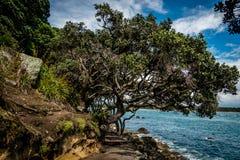Mt Manganui树-陶朗阿 免版税图库摄影
