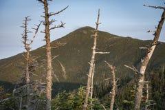 Mt Marcy Through The Trees Adirondack berg, New York royaltyfri bild