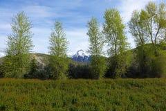 Mt McCaleb -马偕,爱达荷 库存图片