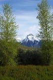 Mt McCaleb - Mackay, Айдахо Стоковые Изображения