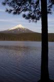 Mt Mcgloughlin Willow Lake Pine Tree Oregon Rural Country stock image