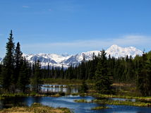 Mt McKinley. Clear view of Mt. McKinley with trees and a stream Royalty Free Stock Images