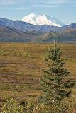 Mt McKinley Foto de Stock Royalty Free