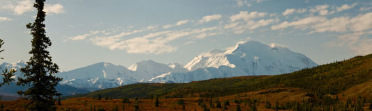 Mt McKinley dans le panorama de stationnement national de Denali Photo libre de droits