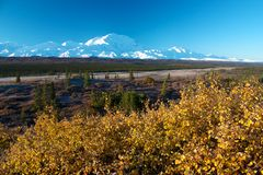 Mt. McKinley with yellow bush Stock Photography