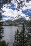 Mt Moran på den storslagna Teton nationalparken, Wyoming Arkivbild