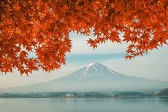 Mt Mount Fuji с цветами падения в Японии Стоковые Изображения