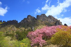 Mt. Myougi in spring Royalty Free Stock Photos