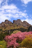 Mt. Myougi in spring Stock Photography