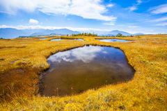 Mt. Naeba summit Marshland Royalty Free Stock Photo