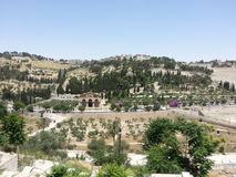 Mt. of Olives view taken from the Eastern Gate of Jerusalem Stock Photography