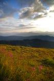 Mt Olympus olympisk nationalparkstaten Washington Royaltyfri Fotografi