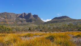 Mt-ossa und buttongrass Anlagen auf der Überlandbahn stock video