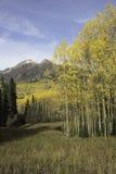 Mt Owen e Ruby Peak com mudança de Aspen imagem de stock royalty free