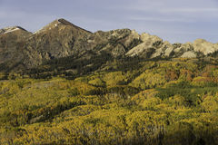Mt. Owen and Ruby Peak with Changing Aspen Stock Photos
