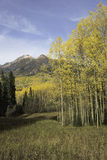 Mt. Owen and Ruby Peak with Changing Aspen Royalty Free Stock Image