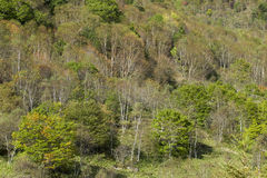 Mt Paisaje de Sajiki en Japón Imagen de archivo