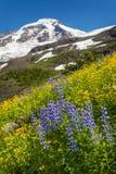 Mt panadero Wildflowers Imagen de archivo libre de regalías