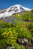 Mt panadero Wildflowers Fotos de archivo libres de regalías