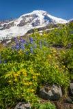 Mt panettiere Wildflowers Fotografie Stock Libere da Diritti