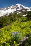 Mt panettiere Wildflowers Immagine Stock Libera da Diritti