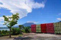 Mt Parque de Fuji y de Oishi Fotografía de archivo libre de regalías
