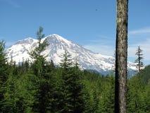 Mt. Più piovoso dalla foresta Immagini Stock