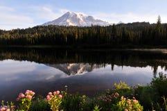 Mt. Più piovoso e lago reflection fotografie stock