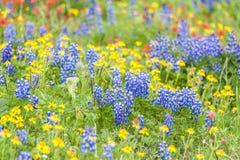 Mt. piekarzów Wildflowers Fotografia Stock