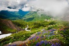 Mt. Piekarz i Wildflowers Zdjęcie Stock