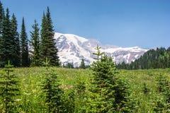 Mt plus pluvieux Image stock