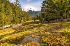 Mt Plus pluvieux, Washington State Images libres de droits