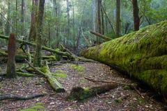 Mt pola park narodowy przy świtem obraz stock