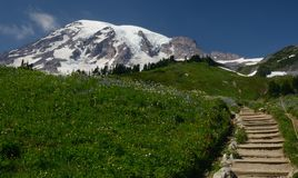 Mt Rainer在春天 库存图片