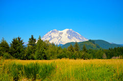 Mt. Rainer Obrazy Stock