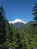 Mt. Rainer Landscape royalty free stock photo