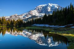 Mt.Rainier Royalty Free Stock Image