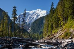 Mt rainier photo stock