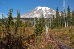 Mt.Rainier and autumn colors Stock Image