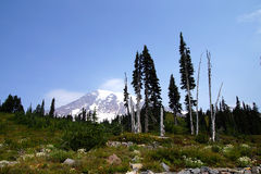 Mt. Rainier, with conifer forest Stock Photography