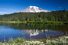 Mt rainier in early morning light Royalty Free Stock Photos